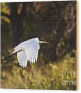 Great White Egret Flight Series - 5 Wood Print