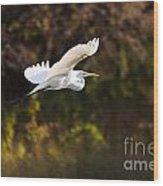 Great White Egret Flight Series - 6 Wood Print