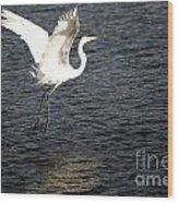 Great White Egret Flight Series - 9 Wood Print