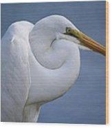 Great White Egret Wood Print