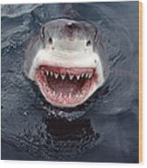 Great White Shark Smile Australia Wood Print by Mike Parry