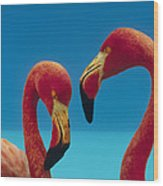 Greater Flamingo Courting Pair Wood Print