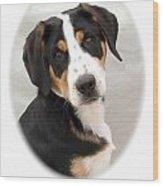 Greater Swiss Mountain Dog 1255 Wood Print