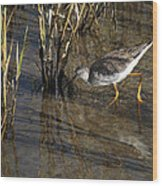 Greater Yellowlegs At Spi Wood Print