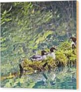 Grebe Podicipedidae Birds Sitting On A Wood Print