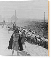 Greece Shepherds And Flocks - C 1909 Wood Print by International  Images