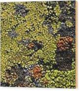 Green Algea Wood Print