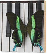 Green And Black Butterfly On Piano Keys Wood Print