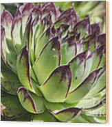Green And Red Succulent Wood Print