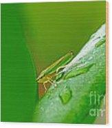 Green And Yellow Bug Wood Print