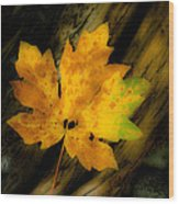 Green And Yellow Maple Leaf In Soft Focus Rests On A Log. Wood Print