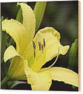 Green And Yellow - Lily Wood Print