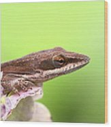 Green Anole In Pastels Wood Print