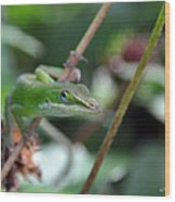 Green Anole Wood Print