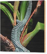 Green Arboreal Alligator Lizard Abronia Wood Print