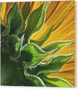 Green Backing Wood Print
