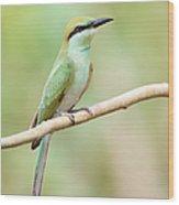 Green Bee-eater (merops Orientalis) Wood Print