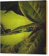 Green  Wood Print