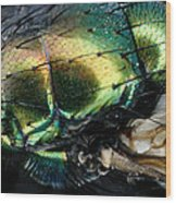 Green Blow Fly Wood Print
