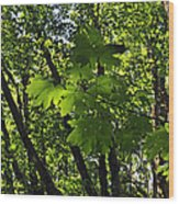 Green Canopy Wood Print