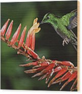 Green-crowned Brilliant Heliodoxa Wood Print
