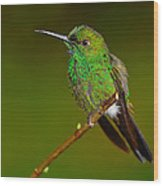 Green-crowned Brilliant Wood Print