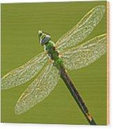 Green Darner Wood Print