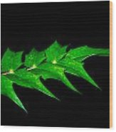 Green Day Wood Print