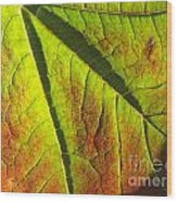 Green Days Past Wood Print by Trish Hale