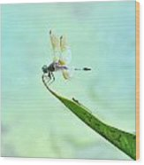 Green Dragonfly Waiting Wood Print