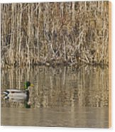 Green Drake Reflections Wood Print