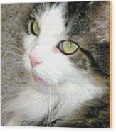 Green-eyed Cat Wood Print