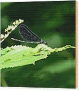 Green Eyes Of Hope Wood Print