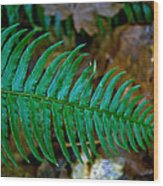 Green Fern Wood Print