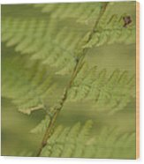 Green Ferns Blend Together Wood Print by Heather Perry