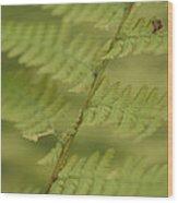 Green Ferns Blend Together Wood Print