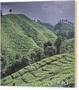 Green Fields On Hills Wood Print