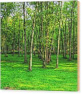 Green Floored Forest Wood Print