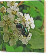 Green Fly Wood Print