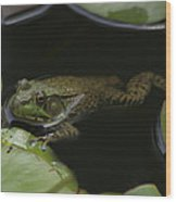 Green Frog And Lily Pads 9613 Wood Print