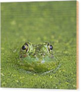 Green Frog Eyes Wood Print