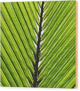 Green Fronds Wood Print