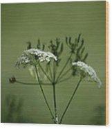 Green Garden Wood Print