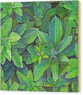 Green Gold Wood Print by Yvonne Scott