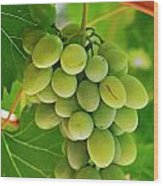 Green Grape And Vine Leaves Wood Print by Sami Sarkis
