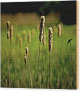 Green Grow The Rushes O Wood Print