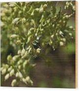 Green Helicid Bee 6 Wood Print