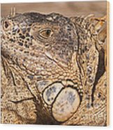 Green Iguana Wood Print