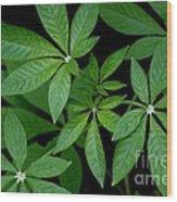 Green Is Beautiful Wood Print