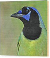Green Jay Portrait Wood Print